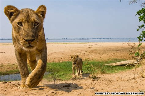 Southern Africa's best boutique safari reserves   CNN Travel