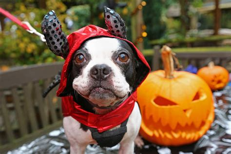 Halloween 2017 in London for kids – Things to do with kids